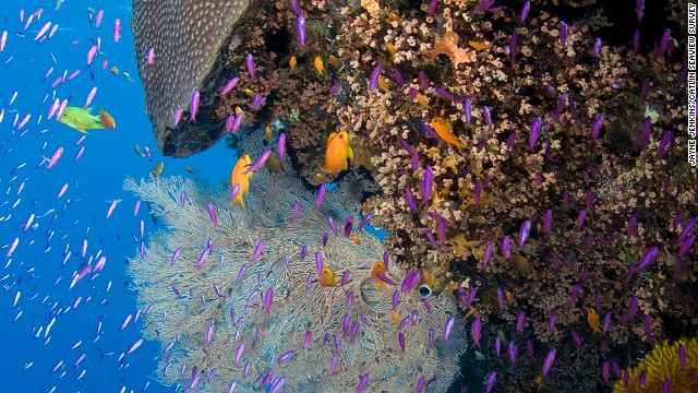 Vibrant sealife surrounds a coral outcrop in Pixie's Garden, part of the Great Barrier's Ribbon Reef