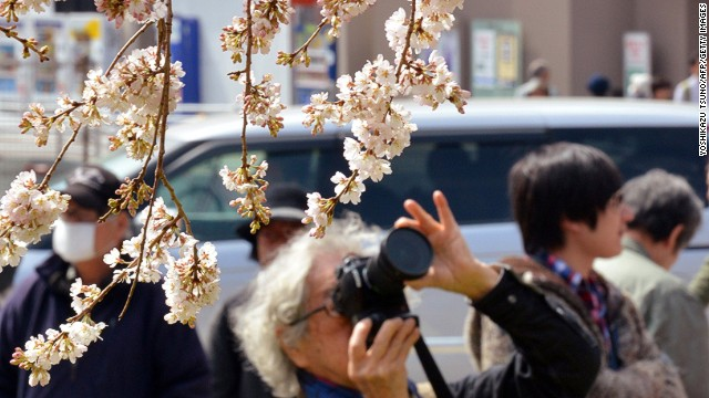 Parts of Japan, including Tokyo, have seen record high spring temperatures, leading to the early blooming.
