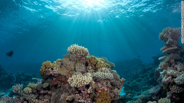 """The two worst things in my mind happening to oceans are global warming and ocean acidification,"" says Ron O'Dor, professor of marine biology at Dalhousie University in Halifax, Canada. ""They're going to have terrible effects on coral reefs. Because of acidification essentially, the coral can't grow and it's going to dissolve away.""<!-- --> </br>"