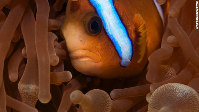 Ensuring the oceans continue to provide inspiration, wonder and services to humankind will come down to personal and collective will, says Cousteau.