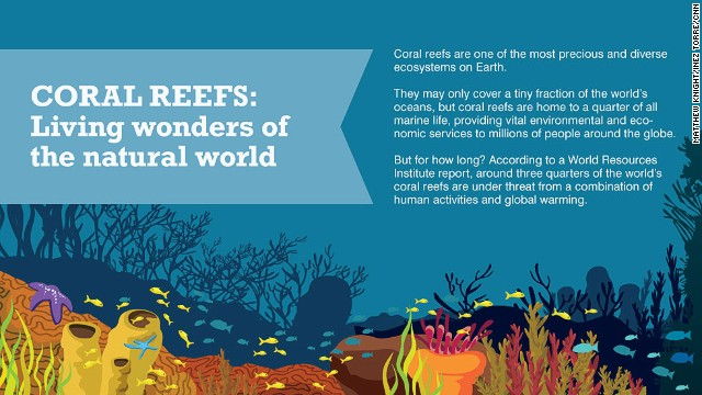 The wonderful world of coral reefs