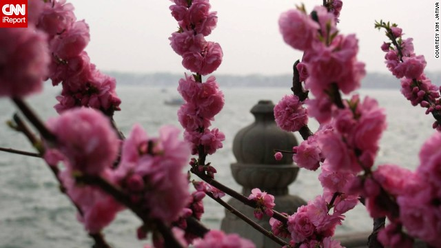"Pink blossoms surround the <a href='http://ireport.cnn.com/docs/DOC-809058'>Summer Palace</a> in Beijing. ""We had no idea how absolutely beautiful China would be in spring, or any time for that matter,"" said Kim Jativa."