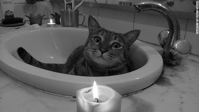 La muerte de una gatita causa indignación en Internet
