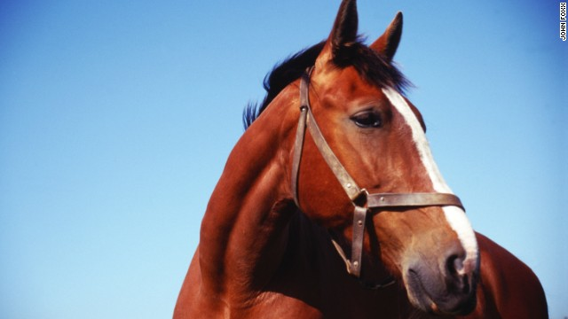 Oklahoma's OK with horse slaughter