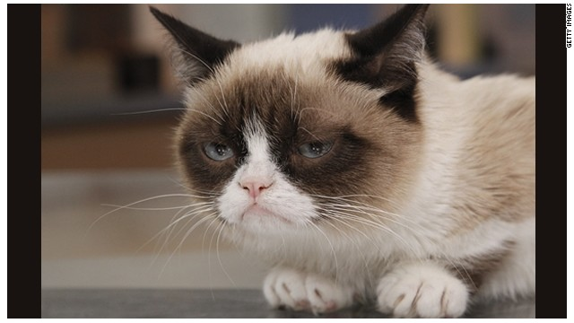 """Grumpy Cat"" cumple un año y sigue enloqueciendo a internet"