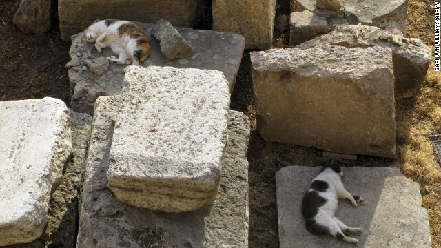 The Torre Argentina Cat Sanctuary in Rome works to help the city's abandoned cats and welcomes volunteers.