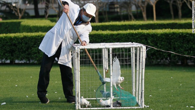 A public park worker places a dove in a cage in Shanghai on April 6.
