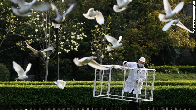 A public park staff carries a cage to catch pigeons at a public area in People's Square, downtown Shanghai on Saturday, April 6. Shanghai municipal government has ordered workers to remove pigeons from public area to prevent the spread of H7N9 bird flu to humans, local media reported.