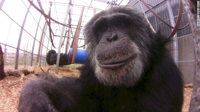 A posing primate as captured with the Little Cyclops camera. Dash raised the money for producing the camera through crowd-funding website <a href='http://www.indiegogo.com/projects/world-s-first-digital-lofi-fisheye' target='_blank'>Indiegogo</a>. Only 1,000 will be made in the first run and sold for a price of $100 each.