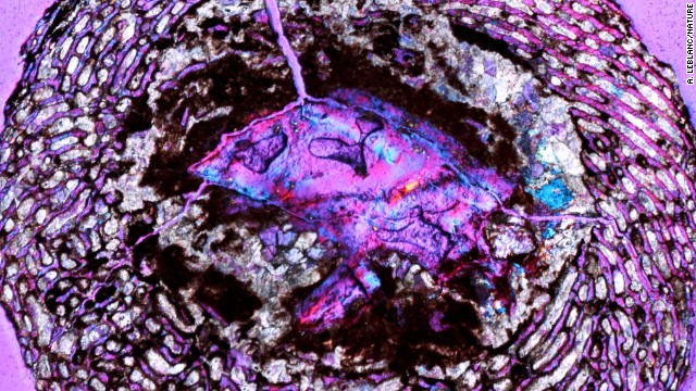 Oldest dinosaur embryos discovered