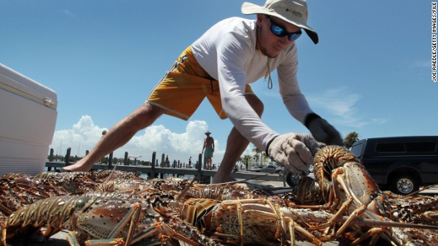 "CNN takes a look at the top five fishing expeditions from across the world. Here, a fisherman gets up close and personal with some lobsters, otherwise known as the ""black gold"" of the sea for their prized -- and elusive -- flesh."