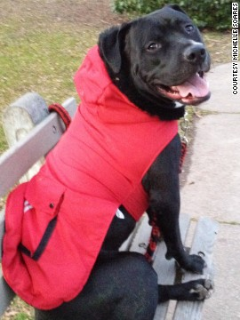 Lucas of Newark, New Jersey, shows off one of his winter coats. Lucas nearly died as a puppy, but student Michelle Soares paid the $3,000 vet bill on a credit card, then worked to pay it off while going to school part-time.