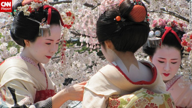 Geishas stand among a few of Japan's famed cherry trees during peak cherry blossom season.