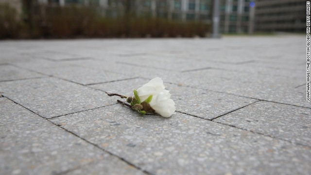 A flower sits near the site where an MIT police officer was killed in Cambridge. Police say they think the bombing suspects were responsible for the shooting on Thursday night, April 18.
