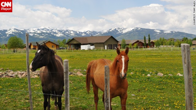Horses pose in their pasture in front of the snow-capped Tetons.