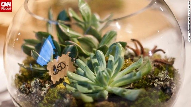 Melissa Hamburg-Hamby of Seattle is an interior designer. She says she started <a href='http://ireport.cnn.com/docs/DOC-959893'>making terrariums</a> as a form of stress relief and has now made more than 100.