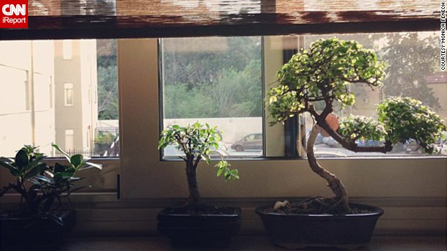 Monica Fenech of Palermo, Italy, shared this image of a <a href='http://ireport.cnn.com/docs/DOC-959176'>bonsai display</a> she created.