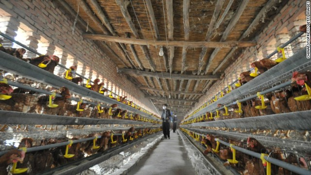 Chickens line the walls at a poultry farm on Thursday, April 18, in Yuncheng, China.