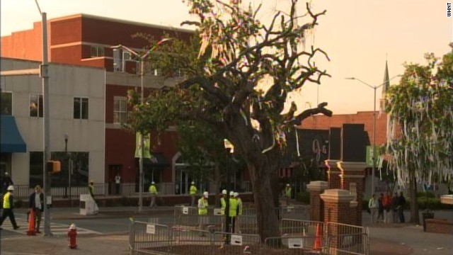 Auburn University removing poisoned oaks