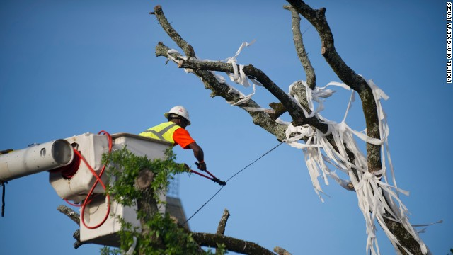 A crew member works to bring down a live oak tree on Tuesday.