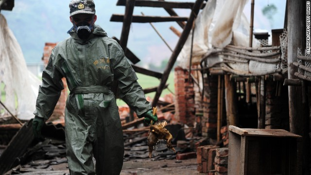A health worker gathers dead ducks during the decontamination of a duck farm on April 24.