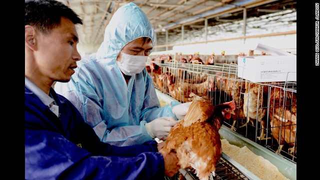 Disease control workers examine a chicken in a poultry farm in Fuqing on April 26.