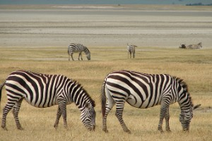 Parque Nacional del Serengueti, Tanzania