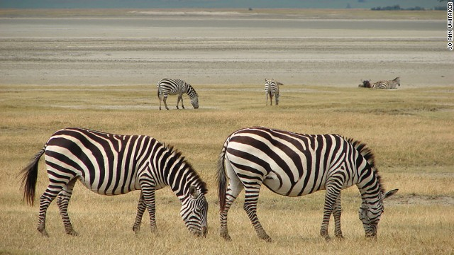 Located in northern Tanzania and spilling into nearby Kenya, where the conservation area is known as the Masai Mara, this iconic savannah hosts the annual migration of 2 million wildebeest, zebra and gazelle followed by their predators, in search of pasture and water. The phenomenal natural spectacle is the largest remaining animal migration in the world.