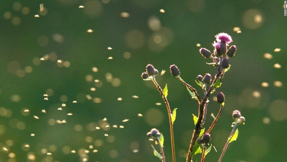 Comprueba el nivel de polen