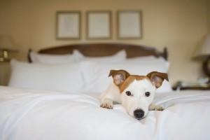 Manten a Fido y a Kitty alejados de tu cama