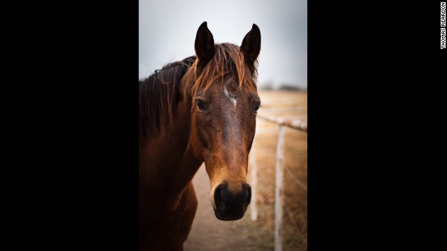 Former racehorses get a second chance at life