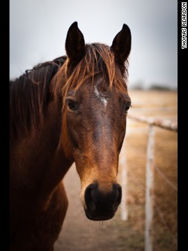 Once considered an unlikely candidate for adoption because of his injuries incurred on the track, ex-racehorse Watson (formerly Wooden Phone) is now enjoying a new life with owner Suzanne Minter. She adopted him while working at <a href='http://lopetx.org/' target='_blank'>LOPE Texas</a>, a thoroughbred rehab and adoption farm. <!-- --> </br><!-- --> </br>Click through our gallery to learn more about how ex-racehorses are enjoying a second chance: