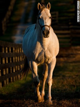 Bull Inthe Heather (yep, that's how it's spelled), retired to Old Friends in 2006, is considered to be the greatest son of Ferdinand, who won the 1986 Kentucky Derby. The death of Ferdinand in a slaughterhouse in 2002 inspired the foundation of Old Friends.