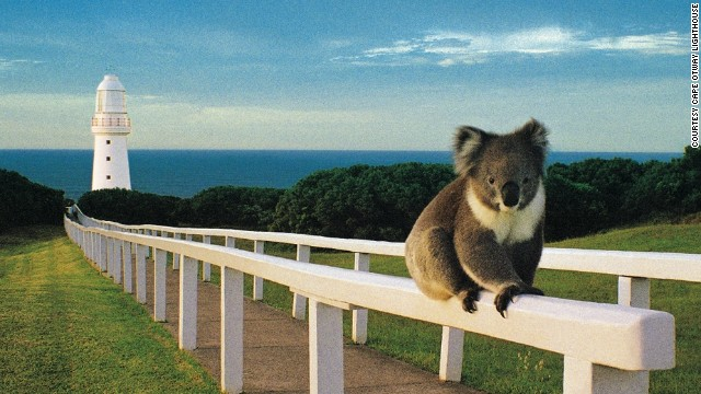 A koala checks out the view from Australia's Cape Otway Lightstation. Built in 1848, the lighthouse, on the treacherous southeast coast, is the oldest in the country.