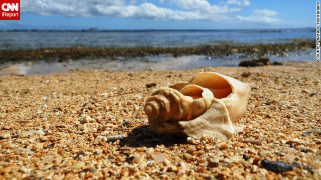 A shell rests on the shoreline of Tonga's Pangaimotu Beach in the South Pacific.
