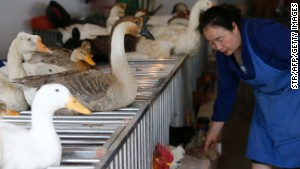 Poultry trade may be spreading deadly flu