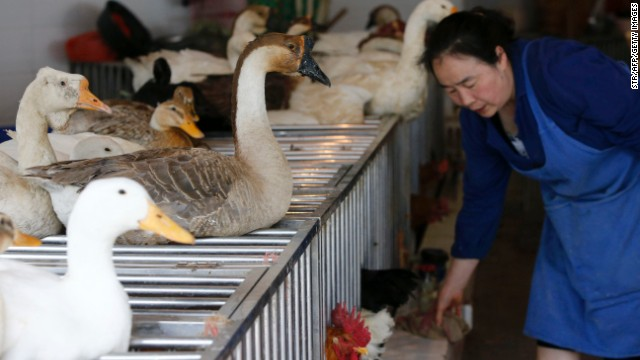 New deadly flu launched by live bird markets