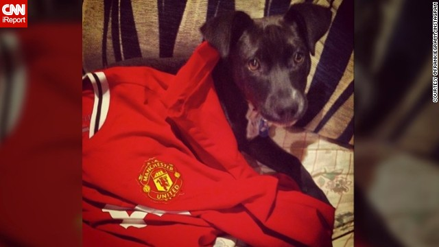 In Oatley, Australia, @frankiegram1 showed off a sad look while wearing a Manchester United top (with help from his owner, Matt).