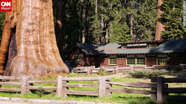 The giant trees of Sequoia National Park overwhelm a building. &quot;At times, you lose perspective of their size,&quot; said Pat Kessler. &quot;Occasionally seeing a human or a building nears the trees brings their awesomeness back into focus.&quot; See more photos on &lt;a href='http://ireport.cnn.com/docs/DOC-800508'&gt;CNN iReport&lt;/a&gt;.
