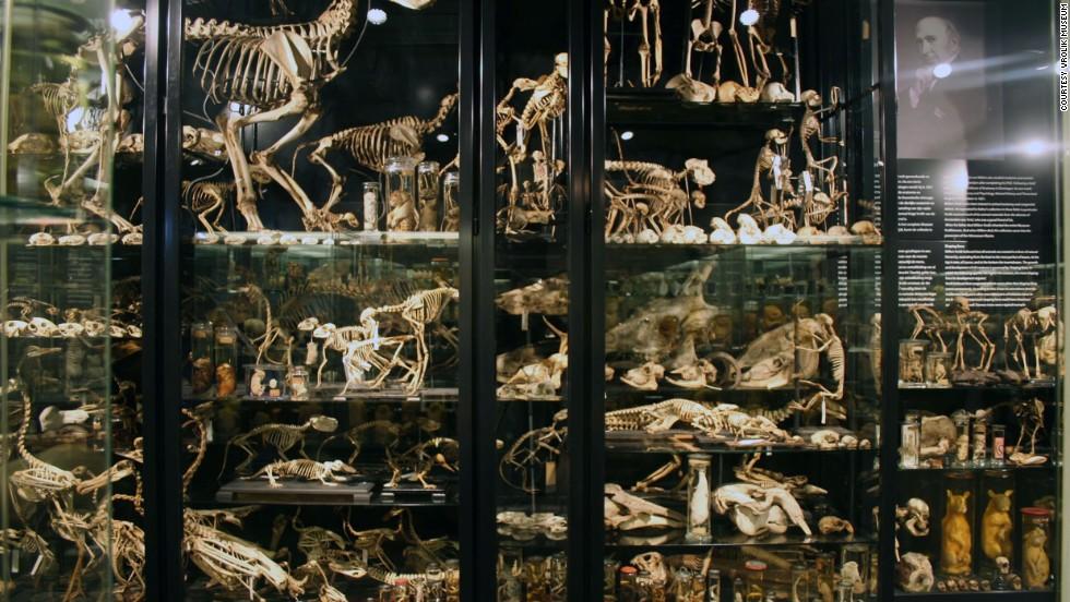 Museo Vrolik, Países Bajos