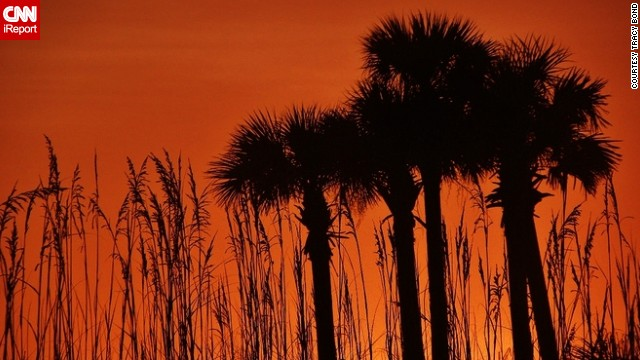 Tracy Bond captured an orange sunrise that engulfed the morning sky while on vacation in Destin, Florida.