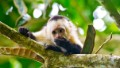 5 Costa Rica rainforest adventures