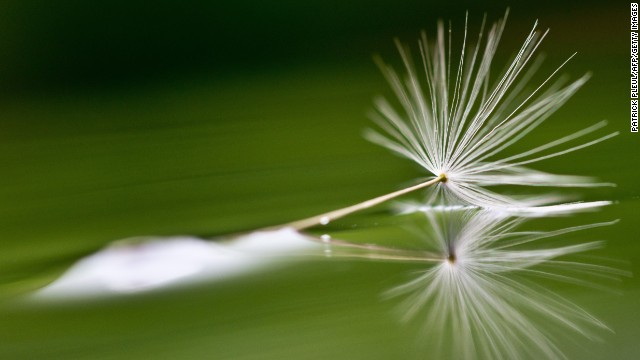 A dandelion seed reflects in a rain-covered path in Sieversdorf, Germany, on May 18.