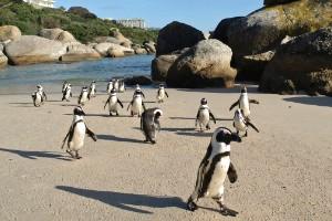 22. Boulders Beach, Ciudad del Cabo