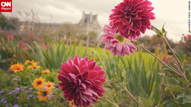 Pink dahlias stand against a backdrop of thousands of other colorful flowers in the Tuileries Garden. See more images from the public garden on CNN iReport.