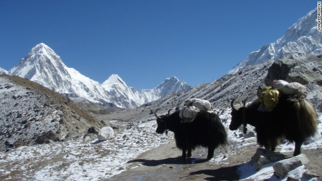 Yak trains are used to carry the pounds of gear it requires to climb Everest. Jon Kedrowski's photo captured these yaks on the way to base camp.