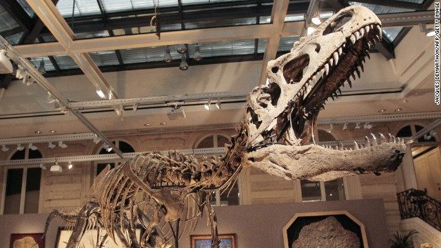 This dinosaur ate like a falcon, study says