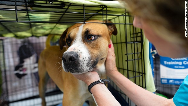 Volunteer Paula McCoart feeds a dog at a shelter for displaced pets on Thursday, May 23.