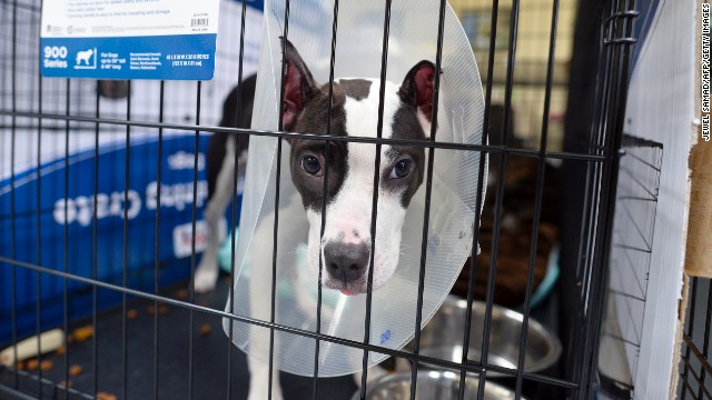 A dog rests in a cage at an animal shelter in Moore.