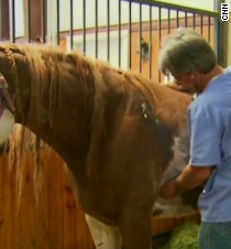 Healing the horses of Moore, Oklahoma - CNN.com Video
